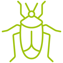 entomotexniki_katsarida-03