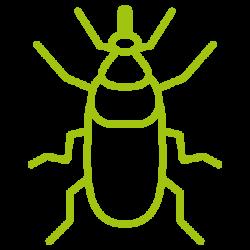 entomotexniki_kokkinoskathari-13