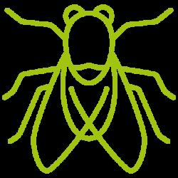 entomotexniki_myga-04