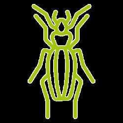 entomotexniki_saraki-08
