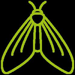 entomotexniki_skoros-05